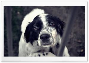 Shy Dog HD Wide Wallpaper for 4K UHD Widescreen desktop & smartphone