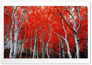 Sierra Nevada Red Trees HD Wide Wallpaper for Widescreen