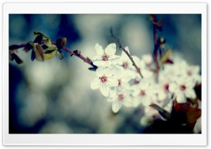 Signs Of Spring HD Wide Wallpaper for Widescreen