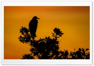 Silhouette of Great Blue Heron, Sunset Ultra HD Wallpaper for 4K UHD Widescreen desktop, tablet & smartphone