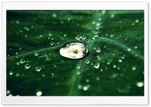 Silver Drops HD Wide Wallpaper for Widescreen