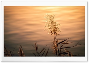 Silvergrass by the Lake HD Wide Wallpaper for Widescreen