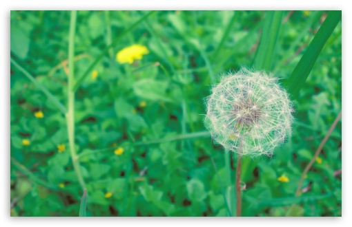 Simple Dandelion ❤ 4K UHD Wallpaper for Wide 16:10 5:3 Widescreen WHXGA WQXGA WUXGA WXGA WGA ; 4K UHD 16:9 Ultra High Definition 2160p 1440p 1080p 900p 720p ; UHD 16:9 2160p 1440p 1080p 900p 720p ; Standard 4:3 5:4 3:2 Fullscreen UXGA XGA SVGA QSXGA SXGA DVGA HVGA HQVGA ( Apple PowerBook G4 iPhone 4 3G 3GS iPod Touch ) ; Tablet 1:1 ; iPad 1/2/Mini ; Mobile 4:3 5:3 3:2 16:9 5:4 - UXGA XGA SVGA WGA DVGA HVGA HQVGA ( Apple PowerBook G4 iPhone 4 3G 3GS iPod Touch ) 2160p 1440p 1080p 900p 720p QSXGA SXGA ; Dual 4:3 5:4 UXGA XGA SVGA QSXGA SXGA ;