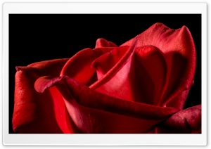 Single Red Rose Black Background HD Wide Wallpaper for Widescreen