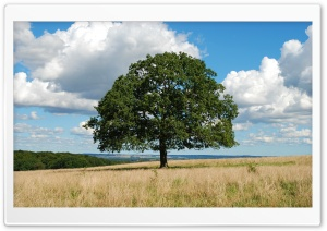 Single Tree HD Wide Wallpaper for Widescreen