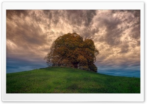 Single Tree, Hill, Cloudy, Landscape HD Wide Wallpaper for 4K UHD Widescreen desktop & smartphone