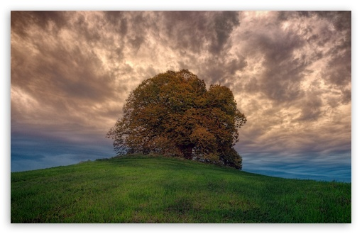 Single Tree, Hill, Cloudy, Landscape UltraHD Wallpaper for Wide 16:10 5:3 Widescreen WHXGA WQXGA WUXGA WXGA WGA ; UltraWide 21:9 24:10 ; 8K UHD TV 16:9 Ultra High Definition 2160p 1440p 1080p 900p 720p ; UHD 16:9 2160p 1440p 1080p 900p 720p ; Standard 4:3 5:4 3:2 Fullscreen UXGA XGA SVGA QSXGA SXGA DVGA HVGA HQVGA ( Apple PowerBook G4 iPhone 4 3G 3GS iPod Touch ) ; Smartphone 3:2 DVGA HVGA HQVGA ( Apple PowerBook G4 iPhone 4 3G 3GS iPod Touch ) ; Tablet 1:1 ; iPad 1/2/Mini ; Mobile 4:3 5:3 3:2 16:9 5:4 - UXGA XGA SVGA WGA DVGA HVGA HQVGA ( Apple PowerBook G4 iPhone 4 3G 3GS iPod Touch ) 2160p 1440p 1080p 900p 720p QSXGA SXGA ;