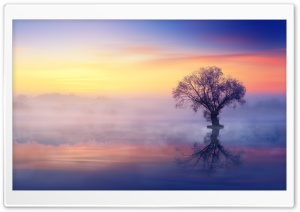Single Tree, Mist Over Lake HD Wide Wallpaper for 4K UHD Widescreen desktop & smartphone