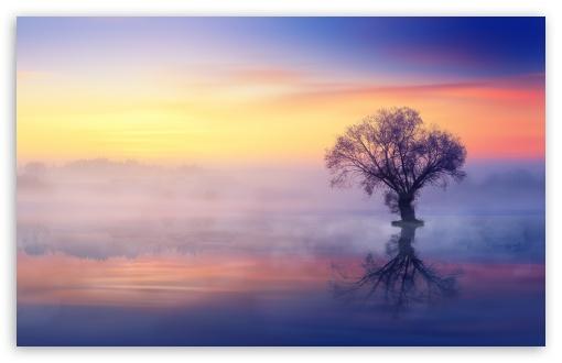 Download Single Tree, Mist Over Lake UltraHD Wallpaper