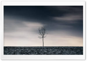Single Tree, Winter HD Wide Wallpaper for 4K UHD Widescreen desktop & smartphone