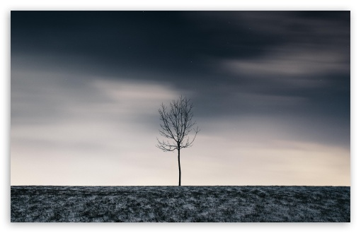 Single Tree, Winter UltraHD Wallpaper for Wide 16:10 5:3 Widescreen WHXGA WQXGA WUXGA WXGA WGA ; UltraWide 21:9 24:10 ; 8K UHD TV 16:9 Ultra High Definition 2160p 1440p 1080p 900p 720p ; UHD 16:9 2160p 1440p 1080p 900p 720p ; Standard 4:3 5:4 3:2 Fullscreen UXGA XGA SVGA QSXGA SXGA DVGA HVGA HQVGA ( Apple PowerBook G4 iPhone 4 3G 3GS iPod Touch ) ; Smartphone 16:9 3:2 5:3 2160p 1440p 1080p 900p 720p DVGA HVGA HQVGA ( Apple PowerBook G4 iPhone 4 3G 3GS iPod Touch ) WGA ; Tablet 1:1 ; iPad 1/2/Mini ; Mobile 4:3 5:3 3:2 16:9 5:4 - UXGA XGA SVGA WGA DVGA HVGA HQVGA ( Apple PowerBook G4 iPhone 4 3G 3GS iPod Touch ) 2160p 1440p 1080p 900p 720p QSXGA SXGA ; Dual 4:3 5:4 3:2 UXGA XGA SVGA QSXGA SXGA DVGA HVGA HQVGA ( Apple PowerBook G4 iPhone 4 3G 3GS iPod Touch ) ;