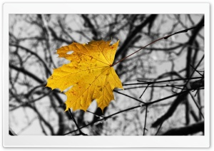 Single Yellow Leaf HD Wide Wallpaper for Widescreen