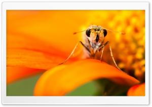 Skipper Butterfly Ultra HD Wallpaper for 4K UHD Widescreen desktop, tablet & smartphone
