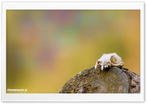 Skull HD Wide Wallpaper for Widescreen