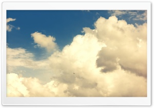 Sky and Bird HD Wide Wallpaper for Widescreen