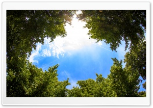 Sky Through Trees HD Wide Wallpaper for Widescreen