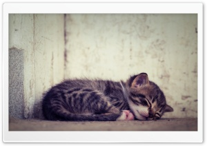Sleeping Baby Cat HD Wide Wallpaper for 4K UHD Widescreen desktop & smartphone