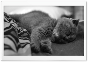 Sleeping Cat HD Wide Wallpaper for Widescreen