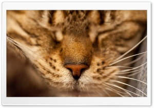 Sleeping Cat Portrait HD Wide Wallpaper for Widescreen