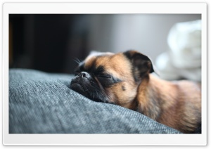 Sleeping Dog HD Wide Wallpaper for Widescreen