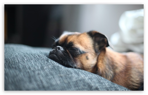 Sleeping Dog ❤ 4K UHD Wallpaper for Wide 16:10 5:3 Widescreen WHXGA WQXGA WUXGA WXGA WGA ; 4K UHD 16:9 Ultra High Definition 2160p 1440p 1080p 900p 720p ; Standard 4:3 5:4 3:2 Fullscreen UXGA XGA SVGA QSXGA SXGA DVGA HVGA HQVGA ( Apple PowerBook G4 iPhone 4 3G 3GS iPod Touch ) ; Tablet 1:1 ; iPad 1/2/Mini ; Mobile 4:3 5:3 3:2 16:9 5:4 - UXGA XGA SVGA WGA DVGA HVGA HQVGA ( Apple PowerBook G4 iPhone 4 3G 3GS iPod Touch ) 2160p 1440p 1080p 900p 720p QSXGA SXGA ; Dual 5:4 QSXGA SXGA ;