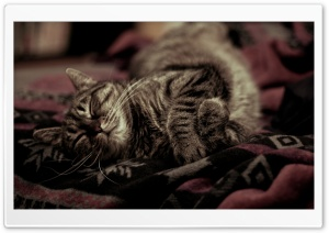 Sleeping Kitty HD Wide Wallpaper for Widescreen