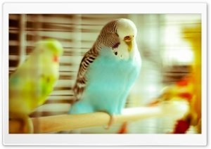 Sleeping Parrot HD Wide Wallpaper for Widescreen