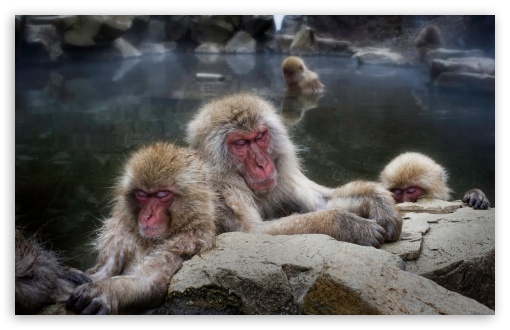 Sleeping Snow Monkeys ❤ 4K UHD Wallpaper for Wide 16:10 5:3 Widescreen WHXGA WQXGA WUXGA WXGA WGA ; 4K UHD 16:9 Ultra High Definition 2160p 1440p 1080p 900p 720p ; UHD 16:9 2160p 1440p 1080p 900p 720p ; Standard 4:3 5:4 3:2 Fullscreen UXGA XGA SVGA QSXGA SXGA DVGA HVGA HQVGA ( Apple PowerBook G4 iPhone 4 3G 3GS iPod Touch ) ; Tablet 1:1 ; iPad 1/2/Mini ; Mobile 4:3 5:3 3:2 16:9 5:4 - UXGA XGA SVGA WGA DVGA HVGA HQVGA ( Apple PowerBook G4 iPhone 4 3G 3GS iPod Touch ) 2160p 1440p 1080p 900p 720p QSXGA SXGA ;