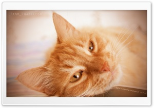 Sleepy Cat HD Wide Wallpaper for 4K UHD Widescreen desktop & smartphone