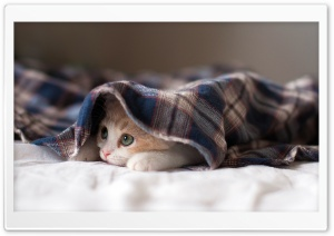 Sleepy Kitten HD Wide Wallpaper for Widescreen