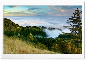 Slope Of Mountain Forest Clouds HD Wide Wallpaper for 4K UHD Widescreen desktop & smartphone