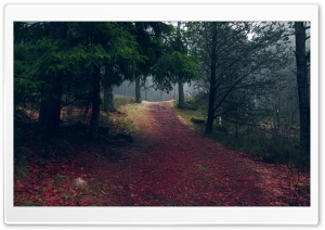 Sloping Pathway HD Wide Wallpaper for Widescreen