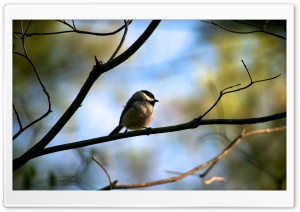 Small bird HD Wide Wallpaper for Widescreen