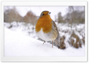 Small Bird In Snow HD Wide Wallpaper for 4K UHD Widescreen desktop & smartphone