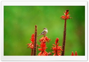 Small Bird Perched on an Aloe Flower in the Rain HD Wide Wallpaper for Widescreen