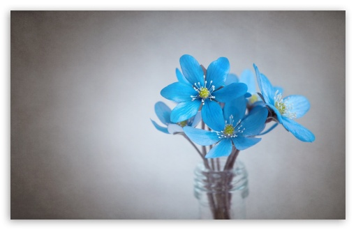 Small Blue Flowers HD wallpaper for Wide 16:10 5:3 Widescreen WHXGA WQXGA WUXGA WXGA WGA ; HD 16:9 High Definition WQHD QWXGA 1080p 900p 720p QHD nHD ; Standard 4:3 5:4 3:2 Fullscreen UXGA XGA SVGA QSXGA SXGA DVGA HVGA HQVGA devices ( Apple PowerBook G4 iPhone 4 3G 3GS iPod Touch ) ; Smartphone 3:2 5:3 DVGA HVGA HQVGA devices ( Apple PowerBook G4 iPhone 4 3G 3GS iPod Touch ) WGA ; Tablet 1:1 ; iPad 1/2/Mini ; Mobile 4:3 5:3 3:2 16:9 5:4 - UXGA XGA SVGA WGA DVGA HVGA HQVGA devices ( Apple PowerBook G4 iPhone 4 3G 3GS iPod Touch ) WQHD QWXGA 1080p 900p 720p QHD nHD QSXGA SXGA ;
