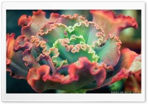 Small Cactus Plant Ultra HD Wallpaper for 4K UHD Widescreen desktop, tablet & smartphone