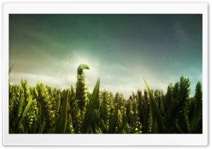Small Chameleon HD Wide Wallpaper for Widescreen