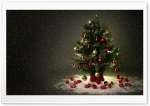 Small Christmas Tree HD Wide Wallpaper for Widescreen