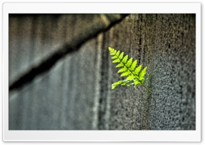 Small Fern HD Wide Wallpaper for Widescreen