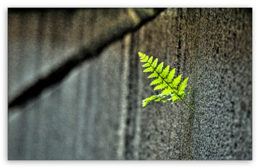 Small Fern ❤ 4K UHD Wallpaper for Wide 16:10 5:3 Widescreen WHXGA WQXGA WUXGA WXGA WGA ; 4K UHD 16:9 Ultra High Definition 2160p 1440p 1080p 900p 720p ; UHD 16:9 2160p 1440p 1080p 900p 720p ; Standard 4:3 5:4 3:2 Fullscreen UXGA XGA SVGA QSXGA SXGA DVGA HVGA HQVGA ( Apple PowerBook G4 iPhone 4 3G 3GS iPod Touch ) ; Tablet 1:1 ; iPad 1/2/Mini ; Mobile 4:3 5:3 3:2 16:9 5:4 - UXGA XGA SVGA WGA DVGA HVGA HQVGA ( Apple PowerBook G4 iPhone 4 3G 3GS iPod Touch ) 2160p 1440p 1080p 900p 720p QSXGA SXGA ; Dual 16:10 5:3 16:9 4:3 5:4 WHXGA WQXGA WUXGA WXGA WGA 2160p 1440p 1080p 900p 720p UXGA XGA SVGA QSXGA SXGA ;