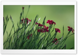 Small Field Flowers HD Wide Wallpaper for Widescreen