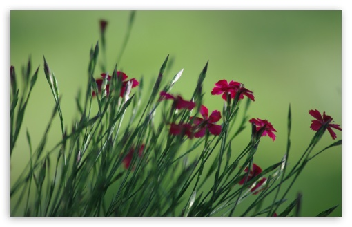 Small Field Flowers ❤ 4K UHD Wallpaper for Wide 16:10 5:3 Widescreen WHXGA WQXGA WUXGA WXGA WGA ; 4K UHD 16:9 Ultra High Definition 2160p 1440p 1080p 900p 720p ; Standard 4:3 5:4 3:2 Fullscreen UXGA XGA SVGA QSXGA SXGA DVGA HVGA HQVGA ( Apple PowerBook G4 iPhone 4 3G 3GS iPod Touch ) ; Tablet 1:1 ; iPad 1/2/Mini ; Mobile 4:3 5:3 3:2 16:9 5:4 - UXGA XGA SVGA WGA DVGA HVGA HQVGA ( Apple PowerBook G4 iPhone 4 3G 3GS iPod Touch ) 2160p 1440p 1080p 900p 720p QSXGA SXGA ; Dual 16:10 5:3 16:9 4:3 5:4 WHXGA WQXGA WUXGA WXGA WGA 2160p 1440p 1080p 900p 720p UXGA XGA SVGA QSXGA SXGA ;
