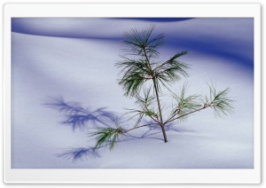 Small Fir Tree HD Wide Wallpaper for Widescreen