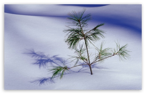 Small Fir Tree ❤ 4K UHD Wallpaper for Wide 16:10 5:3 Widescreen WHXGA WQXGA WUXGA WXGA WGA ; 4K UHD 16:9 Ultra High Definition 2160p 1440p 1080p 900p 720p ; Standard 4:3 5:4 3:2 Fullscreen UXGA XGA SVGA QSXGA SXGA DVGA HVGA HQVGA ( Apple PowerBook G4 iPhone 4 3G 3GS iPod Touch ) ; Tablet 1:1 ; iPad 1/2/Mini ; Mobile 4:3 5:3 3:2 16:9 5:4 - UXGA XGA SVGA WGA DVGA HVGA HQVGA ( Apple PowerBook G4 iPhone 4 3G 3GS iPod Touch ) 2160p 1440p 1080p 900p 720p QSXGA SXGA ;