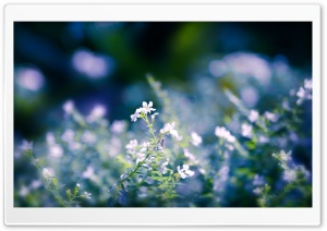 Small Flowers Close Up HD Wide Wallpaper for Widescreen