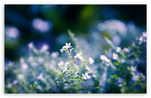 Small Flowers Close Up ❤ 4K UHD Wallpaper for Wide 16:10 5:3 Widescreen WHXGA WQXGA WUXGA WXGA WGA ; 4K UHD 16:9 Ultra High Definition 2160p 1440p 1080p 900p 720p ; Standard 4:3 5:4 3:2 Fullscreen UXGA XGA SVGA QSXGA SXGA DVGA HVGA HQVGA ( Apple PowerBook G4 iPhone 4 3G 3GS iPod Touch ) ; Tablet 1:1 ; iPad 1/2/Mini ; Mobile 4:3 5:3 3:2 16:9 5:4 - UXGA XGA SVGA WGA DVGA HVGA HQVGA ( Apple PowerBook G4 iPhone 4 3G 3GS iPod Touch ) 2160p 1440p 1080p 900p 720p QSXGA SXGA ; Dual 4:3 5:4 UXGA XGA SVGA QSXGA SXGA ;