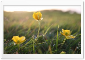 Small Flowers In The Field HD Wide Wallpaper for Widescreen