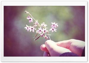Small Flowers Twig HD Wide Wallpaper for Widescreen