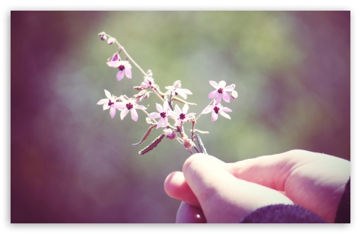 Small Flowers Twig ❤ 4K UHD Wallpaper for Wide 16:10 5:3 Widescreen WHXGA WQXGA WUXGA WXGA WGA ; 4K UHD 16:9 Ultra High Definition 2160p 1440p 1080p 900p 720p ; UHD 16:9 2160p 1440p 1080p 900p 720p ; Standard 4:3 5:4 3:2 Fullscreen UXGA XGA SVGA QSXGA SXGA DVGA HVGA HQVGA ( Apple PowerBook G4 iPhone 4 3G 3GS iPod Touch ) ; Tablet 1:1 ; iPad 1/2/Mini ; Mobile 4:3 5:3 3:2 16:9 5:4 - UXGA XGA SVGA WGA DVGA HVGA HQVGA ( Apple PowerBook G4 iPhone 4 3G 3GS iPod Touch ) 2160p 1440p 1080p 900p 720p QSXGA SXGA ;